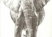aafrika-elevant