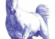 hobune-galopp