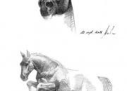 hobune-hyppab