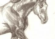 hobune-pea