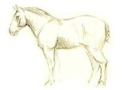 hobune-profiil