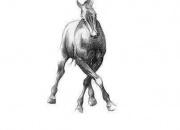 hobune-sammumas