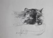 kass-asemel