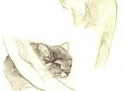 marmosett-tsintsilja