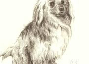 roosa_koer