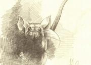 hiirepoiss
