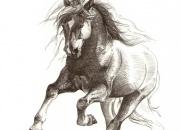 hobune-2