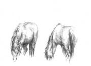 hobused-soomas