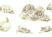 kilpkonnad