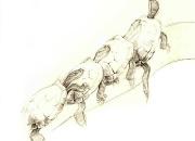 punakorv-ilu-kilpkonn