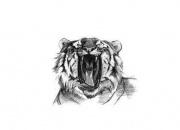 tiiger-haigutab